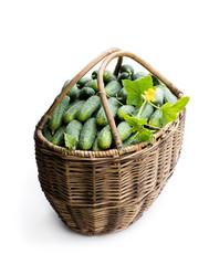 Big basket full of fresh cucumbers isolated on white