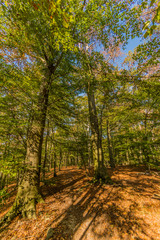 beautiful autumn day in the forest with sunlight coming through the trees creating shadows in Spaubeek in South Limburg in the Netherlands Holland