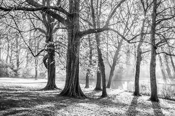beautiful black and white picture of trees with sparse haze and a river in wonderful day in the city of Bruges Belgium