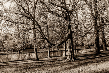 beautiful black and white picture of trees and a river in wonderful day in the city of Bruges Belgium