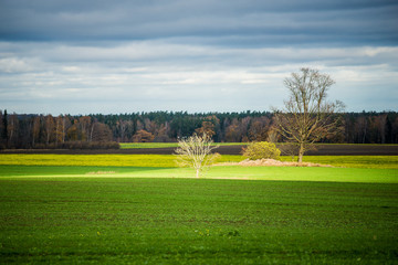 An autumn landscape. A view of the green country agricultural field against stormy blue sky. Evcening light. Latvia