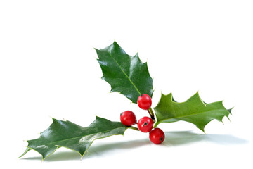 Christmas Holly With Red Berries. Traditional festive decoration. Holly branch with red berries on white background