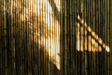 light and shadow on the bamboo wall