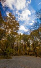 Autumn Trees in Shale Hollow Park, Lewis Center, Ohio