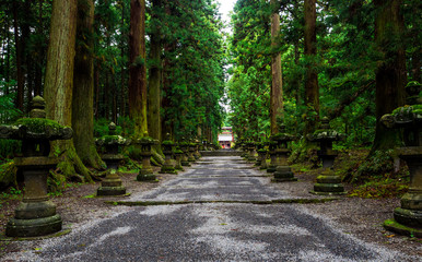 Fujiyoshida Sengen Shrine, a long approach lined by stone lanterns and tall cedar trees, Japan - Sep 2018 Wall mural