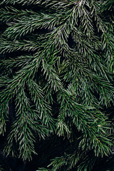 New Year Background. Christmas Background with green pine tree brunch. Copy space.