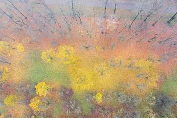 colorful fallen autumn foliage on ground under bare trees. soft aquarelle colors