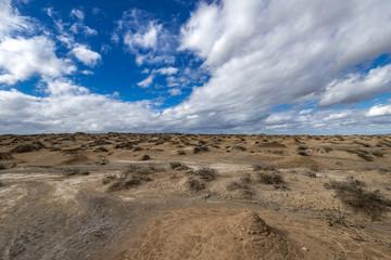 Wildlife, desert land