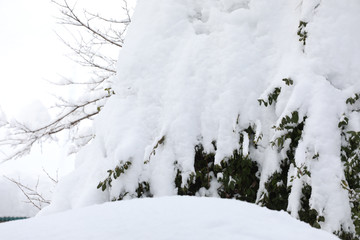 Tree cover with snow in the park,Japan