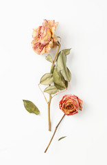 Two dry rose flowers with stem and leaves on white background