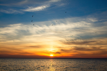 background of sunset on the sea, birds flying among the clouds, beautiful landscape