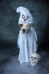 Halloween Hundeshooting im Studio