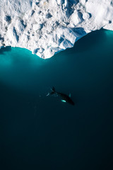 Minimalistic aerial view of icebergs and a humpback whale in Greenland
