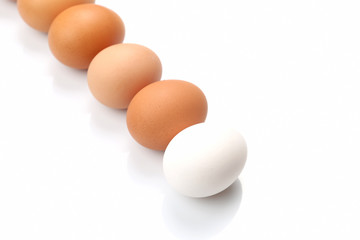 eggs are on a white background