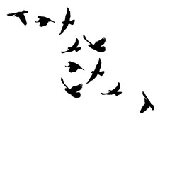 flock of a bird flying silhouette