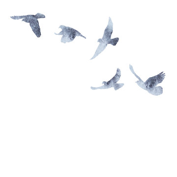 isolated flock of birds flying, gray watercolor silhouette