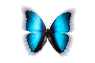 beautiful blue butterfly with blurred wings. isolated on white background