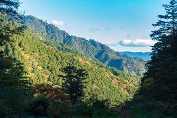 森 / 林 / 晴天 / 木々 / 山のイメージ