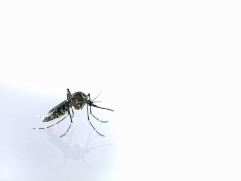 Close-up Mosquito on water After the mosquito larva. It is a disease-causing animal Dengue and