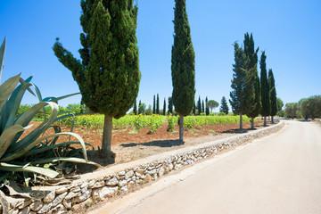 Santa Cesarea Terme, Apulia - On the country road towards Santa Cesarea Terme