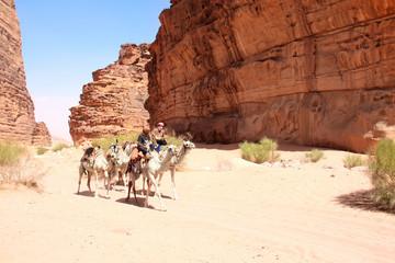 Caravan of camels in Wadi Rum desert, Jordan