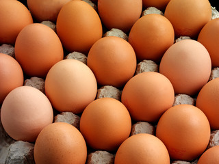 BROWN EGGS IN TRAY