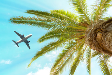 Passenger airplane flying above the palm tree against the blue sky. Wall mural