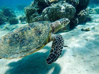 Fotorolgordijn Schildpad tartaruga marina