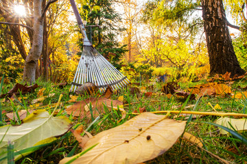 Rake keaning at a tree in Autumn on lawn covered with leaves in a garden