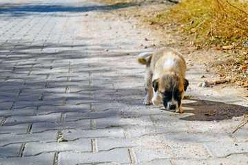 Lovely small puppy on the street. Young street dog.