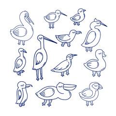 sea bird illustration.