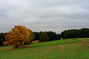 beautiful autumn day in a clearing near the forest