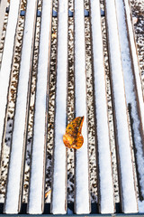 fallen leaf on wooden bench covered with snow