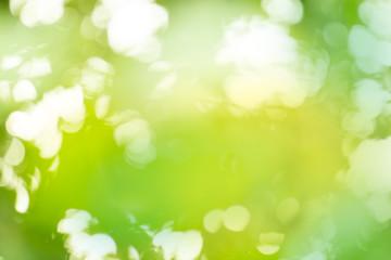 Green bokeh background. Green bio blurred background.