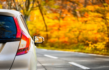 Close Up Tail lamp of The car on the road or gold line in the forest during the autumn season with blur forest and Leaves change color background in travel and transportation concept. Fototapete