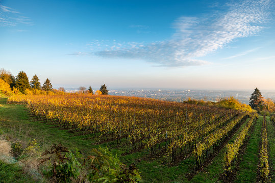 Paysage de vignes en automne en Lorraine en fin de journée