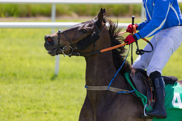 Close-up on jockey and race horse on the track