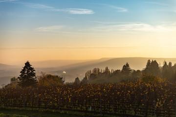 Vue sur les vignes d'un paysage de campagne en Moselle