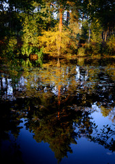 Golden green and orange autumn trees and reflections in a lake - in evening light