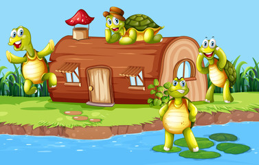 Turtle at the wooden house