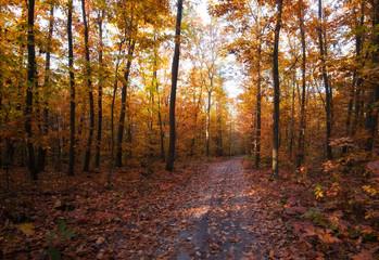 yellow trees in autumn