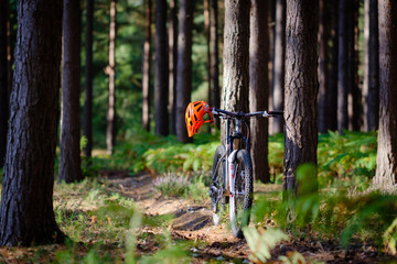 Mountain Bike leaning against a tree on trail in the pine forest, orange helmet, sunshine