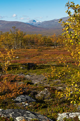 Autumn landscape with birch trees and mountais. Northern Sweden
