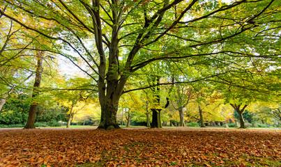 Baumschönheiten, Indian Summer, Schönheit des Herbstes in Wald und Park, Spätsommer,  wundervolle Farben, weiches, stimmungsvolles Licht :)