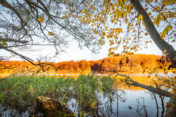 Colorful trees by a lake in the fall