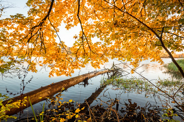 Wooden log hanging over a lake in the fall