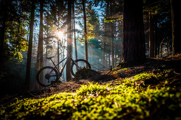 Mountain bike in dramatic beams of sunlight in bright green forest