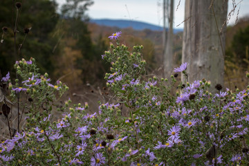 Wildflowers booming in the forest