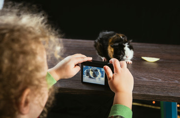 Girl child taking a picture with digital photo camera of young domestic guinea pig (Cavia porcellus), also known as cavy or domestic cavy indoors, black background, brown wooden table. Hobby concept.