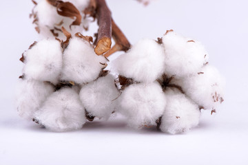 cotton on a white background